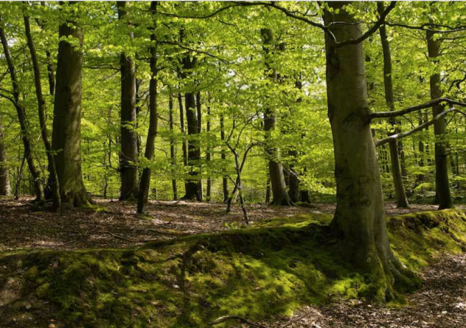 Skovtur – Mød andre studerende